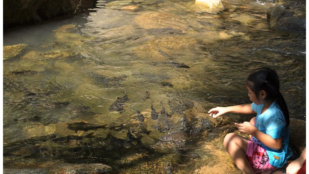เด็กกับปลาพลวงที่น้ำตกพลิ้ว