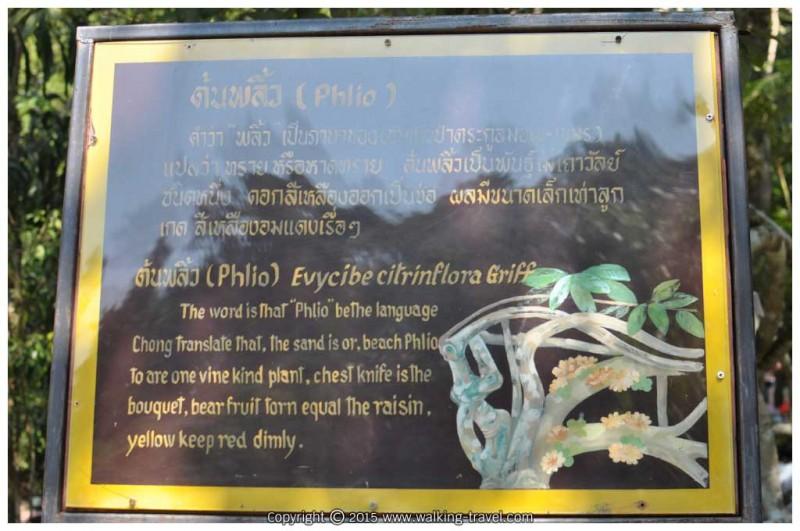 คำว่าพลิ้วเป็นภาษาของชนชาวป่าตระกูลมอญ-เขมร แปลว่า ทราย หรือ หาดทราย ต้นพลิ้วเป็นพันธุ์ไม้เถาวัลย์ชนิดหนึ่ง ดอกสีเหลืองออกเป็นช่อ ผลมีขนาดเล็กเท่าลูกเกด สีเหลืองอมแดงเรื่อๆ