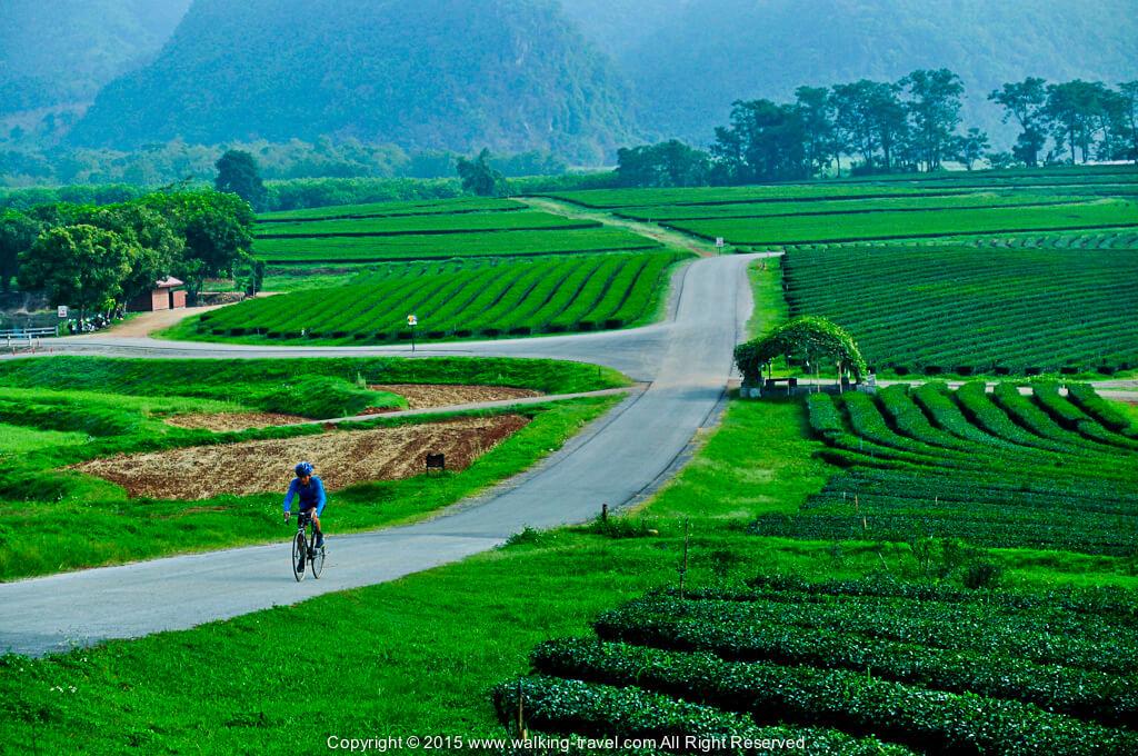 ทางปั่นจักรยาน